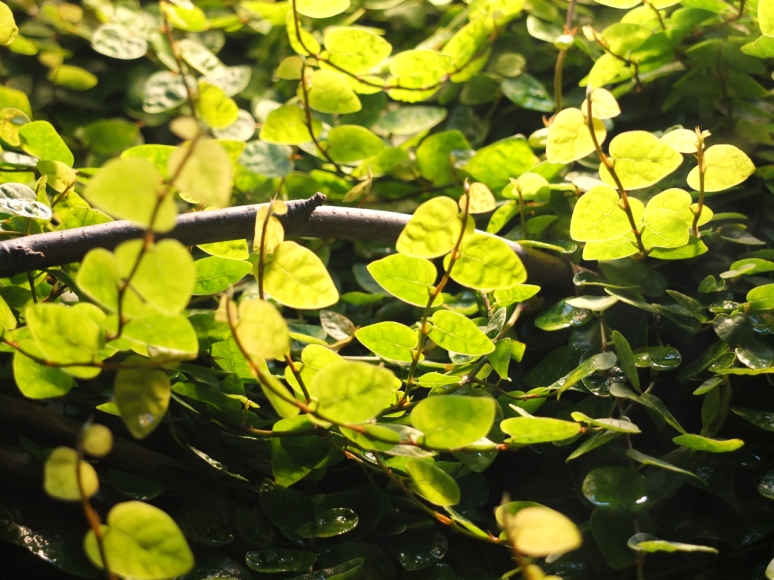 Leaves in Manchester Museum