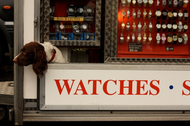 Stamford watch dog