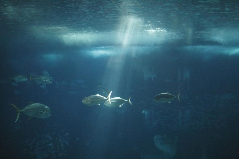Lisbon Oceanarium Light
