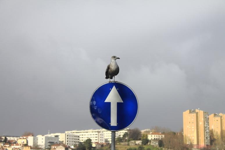 Porto Seagull