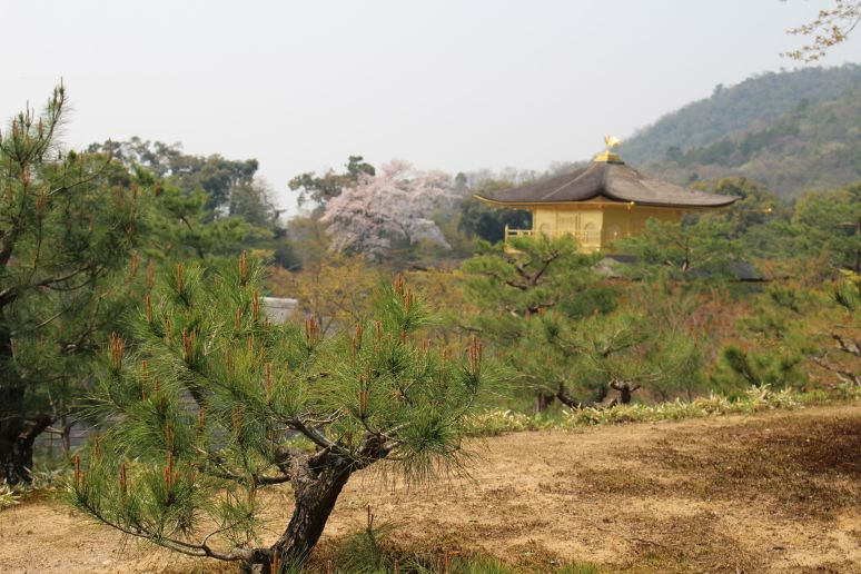 Temple of the Golden Pavillion Kyoto Kinkaju-ji