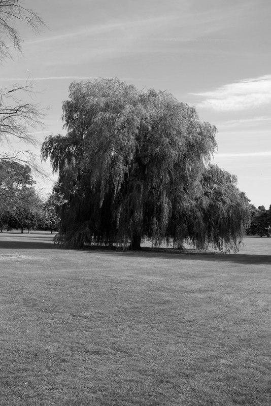 Tree Kettering
