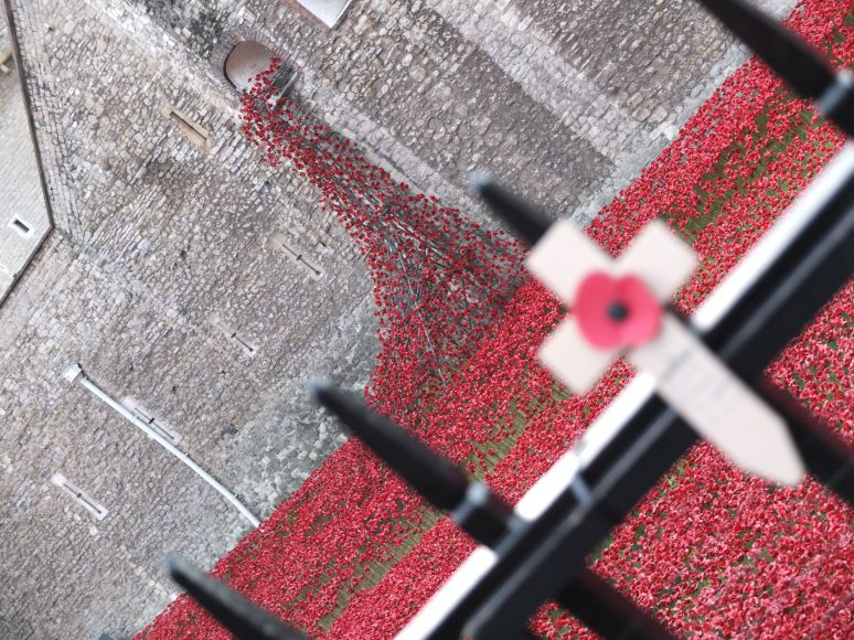 Tower of London Remembrance Poppies