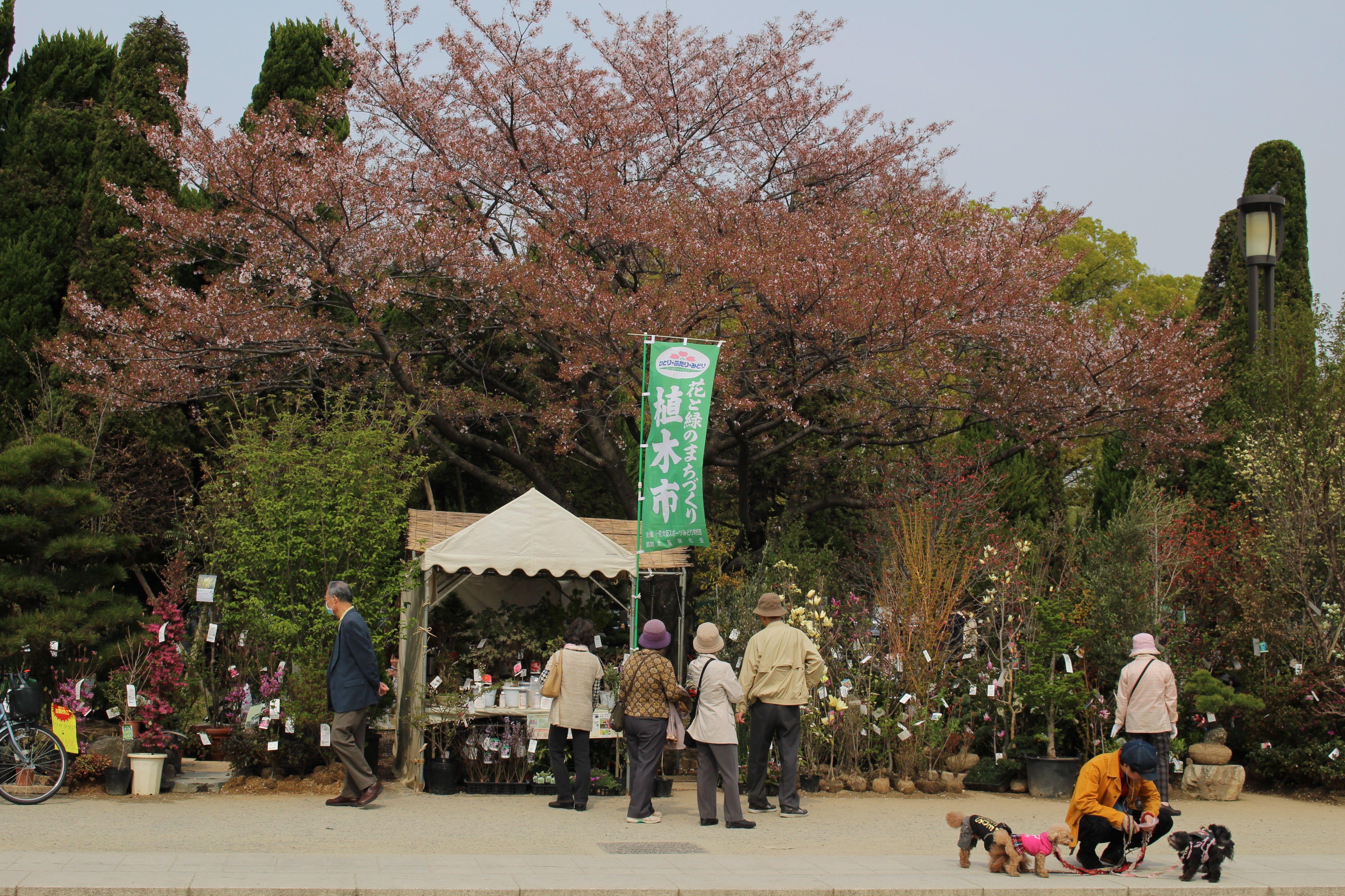 Osaka Collection   Oblique Exposure