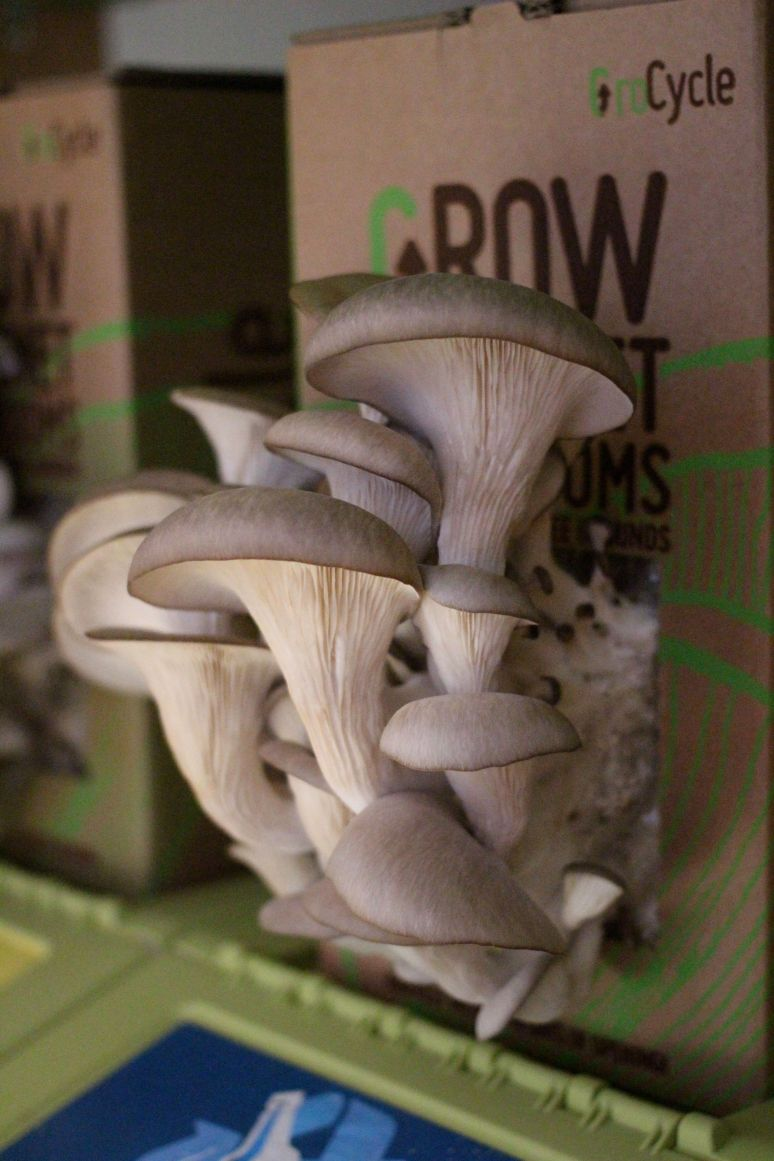 Grocycle Mushrooms